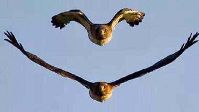 Eagle's Rebirth